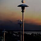 Gulls and Lamps by Antanas