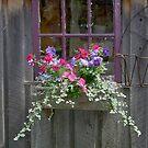 Window Bling by Brenda Dow