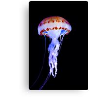 Purple Striped Jellyfish (Chrysaora colorata) Canvas Print