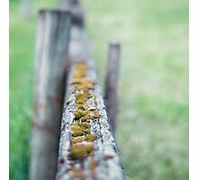 focal fencing Photographic Print