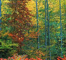 SUMAC AND HARDWOOD FOREST by Chuck Wickham