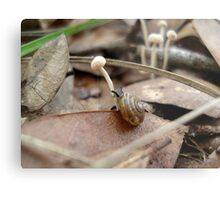 Snail in a Mushroom Jungle Metal Print