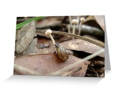 Snail in a Mushroom Jungle Greeting Card