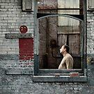 Frames: free interpretation by YTYT