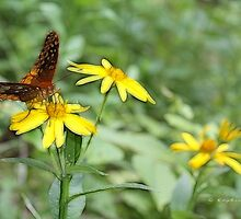 Butterfly On Yellow by Kay  G Larsen