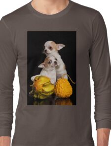 Two puppies chihuahua on a black background Long Sleeve T-Shirt