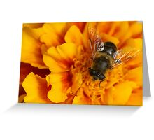 rest of a bee Greeting Card