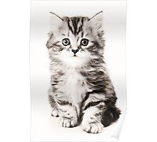 Fluffy kitten black and white photo Poster