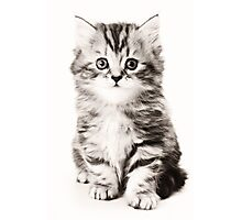Fluffy kitten black and white photo Photographic Print