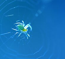 SPIDER IN THE WEB by mariette sardin