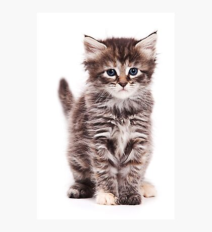 Fluffy tabby kitten Photographic Print