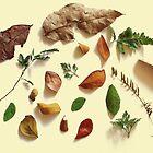 Leaf Life by jimmytan