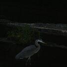 Night Heron by Z.S. Lewis