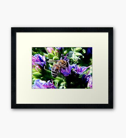 Bee on Buddleja Framed Print