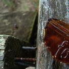 Bottling by Tippikal