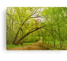 State university grove Canvas Print