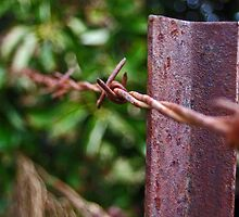 Barbed wire by Katrina Freckleton