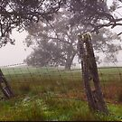 old fence by Andrew Cowell
