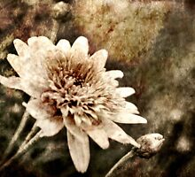 Flower Grunge by Trish Woodford