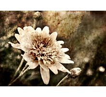 Flower Grunge Photographic Print