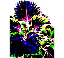 Coloured Foliage Photographic Print