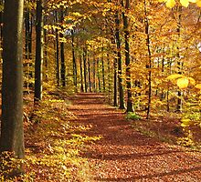 Autumn in the forest (Denmark) by Trine