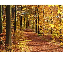 Autumn in the forest (Denmark) Photographic Print