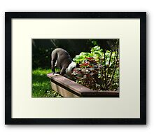 Digging in the flower bed?  No, not me! Framed Print