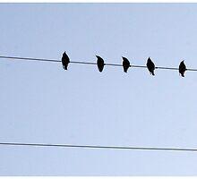 birds on a wire by fergusont