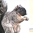 Mr. Squirrel by Pat Moore