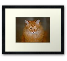 My Maine Coon Cat - Neo Framed Print