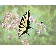 Butterfly and Bumblebee Fine Art Print Photographic Print