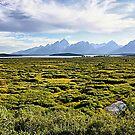 Willow Flats, Grand Teton NP  by Teresa Zieba