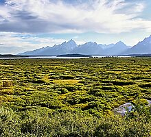 Willow Flats, Grand Teton NP  by Teresa Zieba