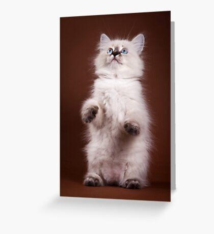 fluffy Siberian cat Greeting Card
