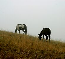 Fog Horses by Donna Ridgway
