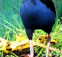 Purple Swamp Hen New Zealand icon by Sandra  Sengstock-Miller