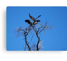 Vultures Landing Canvas Print