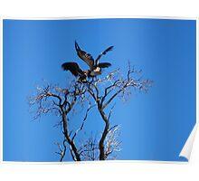 Vultures Landing Poster