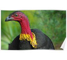 Scrub turkey Poster