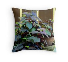 Mornings Varigated Colors Throw Pillow