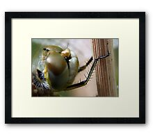 Variegated Meadowhawk, Immature Female, Close Crop of Eyes 2 Framed Print