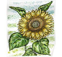 Sunflower! Poster