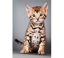 Bengal kitten Photographic Print