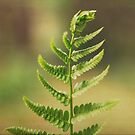 A Single Fern by Bethany Helzer
