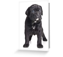 Black Cane Corso puppy Greeting Card