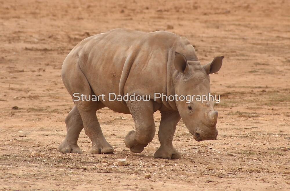 Baby Rhino by Stuart Daddow Photography
