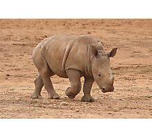 Baby Rhino Photographic Print