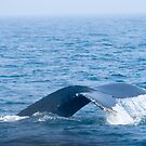Humpback Whale by Sean McConnery