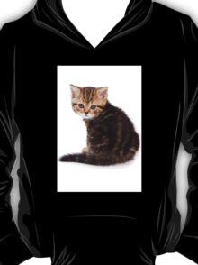 fluffy tabby kitten T-Shirt